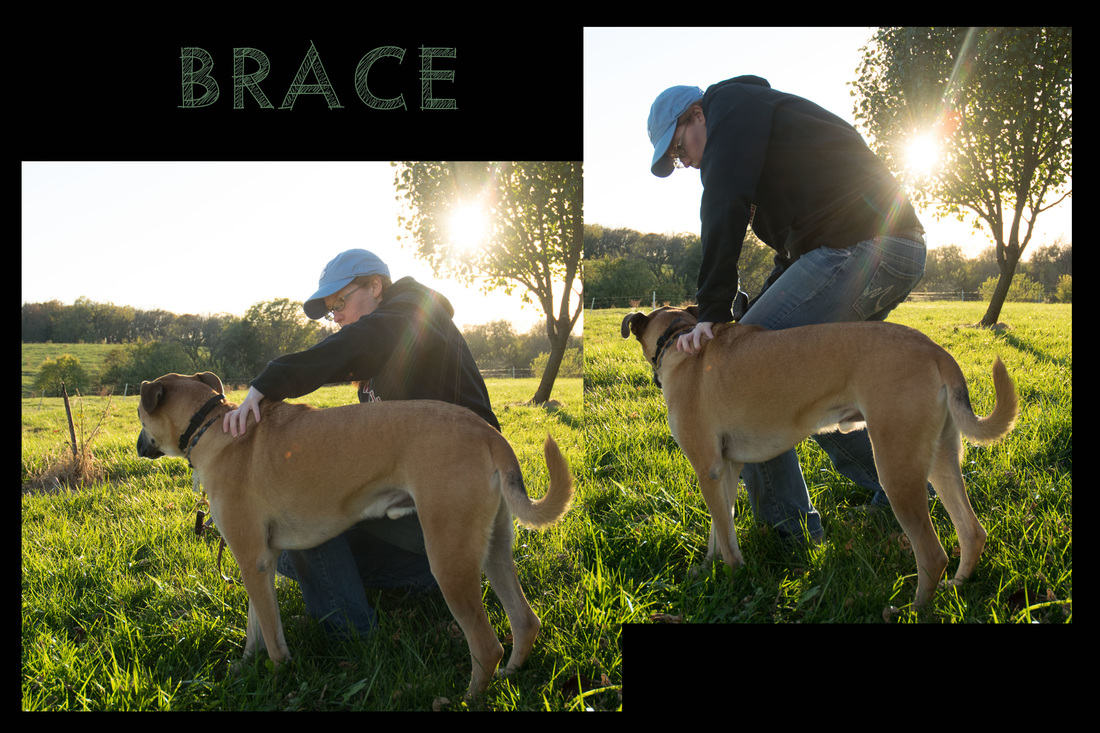 bracing_orig task counter balance & bracing robbie, a crps service dog